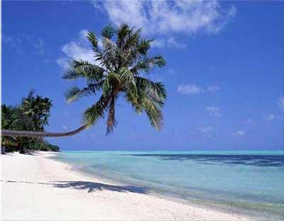 sunny-beach-palm.jpg