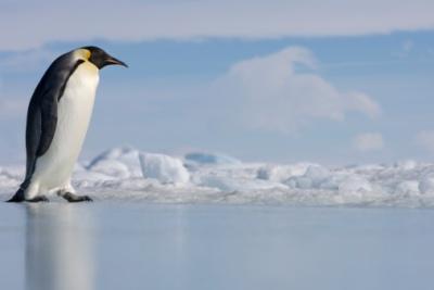 penguinwalk.jpg