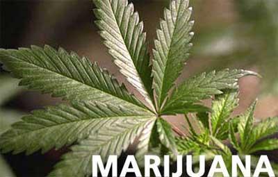 marijuanaph.jpg